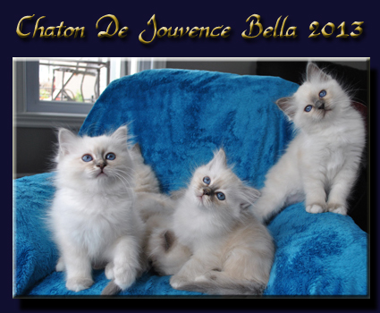 chaton bella 2013