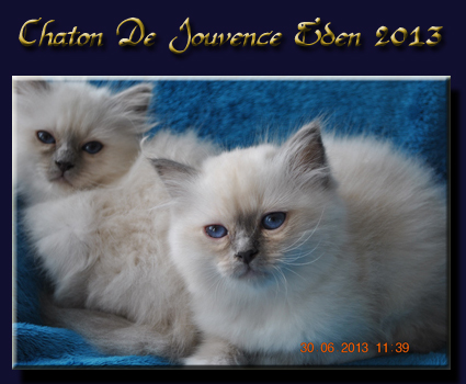 chaton eden 2013 1